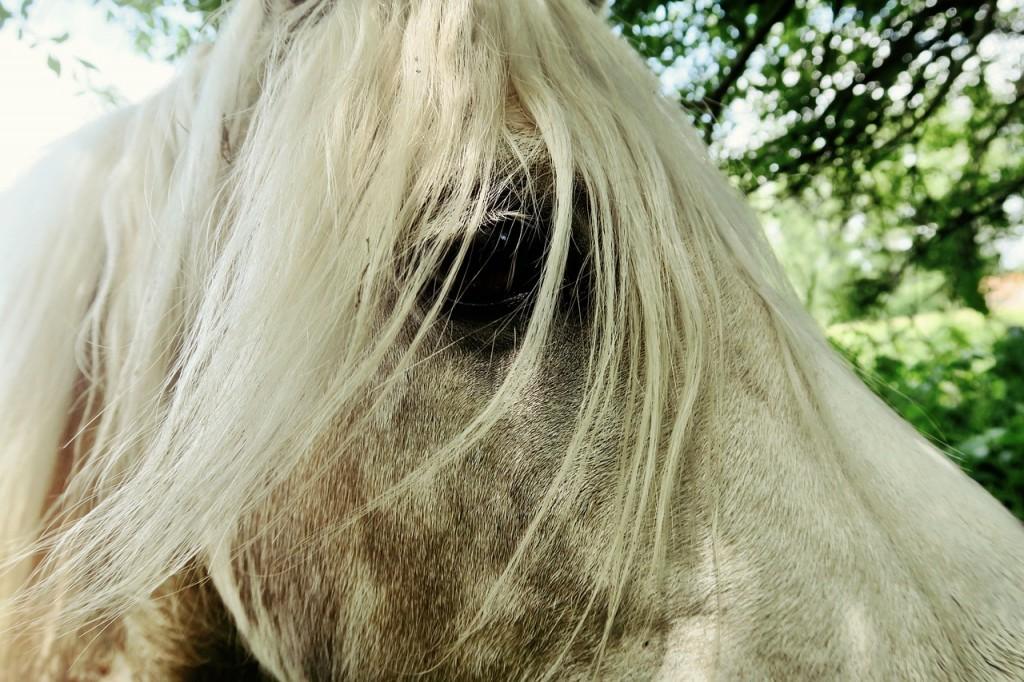 horse-828773_1280