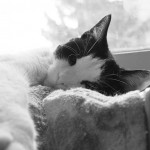 「世界から猫が消えたなら」あらすじ・読書感想文
