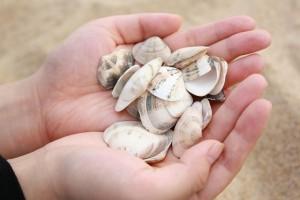 clam-1057773_1280