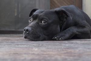 dog-873794_640