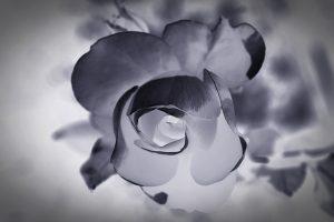 mourning-1665772_640