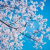 箕面市お花見スポットまとめ|勝尾寺・箕面公園など見所や穴場の桜情報も♪