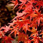 箕面の滝の紅葉が素敵♪見頃の時期は?ライトアップや駐車場情報も