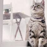 カルカンCMの子猫の種類は何?可愛すぎるWEB限定動画もチェック
